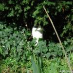 2007-03-11 - Grouik enjoying the sun in the grass