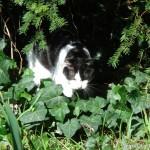 2007-03-11 - Grouik hiding in the garden