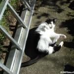 2007-03-11 - Grouik catching sunbeams