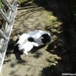 2007-03-11 - Grouik sun bathing