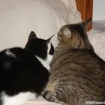 2007-03-24 - Grouik and Milou cuddling