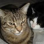 2007-03-24 - Milou an Grouik conspiring