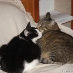 2007-03-24 - Grouik and Milou conspiring