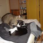 2007-03-26 - Milou telling a secret to Grouik
