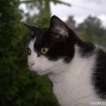 2007-05-18 - Grouik