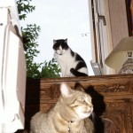 2007-05-18 - Grouik and Milou