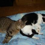2007-06-15 - Milou and Grouik concentrating