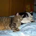 2007-06-15 - Milou and Grouik doing overtime