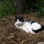 2007-06-24 - Grouik in his nest