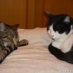 2007-08-03 - Milou and Grouik (dreaming?)