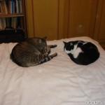 2007-08-03 - Milou and Grouik napping