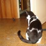 2007-08-08 - Grouik and his bird