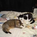 2007-08-16 - Grouik and Milou bathing