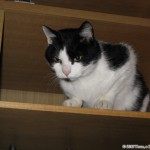 2007-11-10 - Grouik from a bookshelf