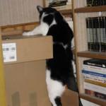 2007-12-01 - Grouik climbing into boxes