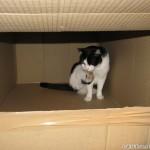 2010-09-27 - Grouik bathing in a box