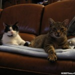 2010-10-07 - Grouik and Milou working hard