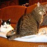 2010-10-07 - Grouik and Milou