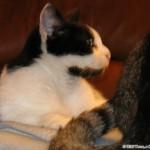 2010-10-07 - Grouik and... Milous tail