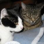 2010-10-11 - Grouik and Milou