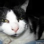 2010-11-07 - Grouik (after some catnip?)
