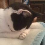 2010-11-12 - Grouik sleeping on a blanket