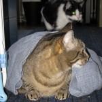 2011-04-08 - Grouik and Milou
