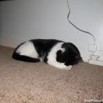 2011-07-31 - Grouik zzzzzzing