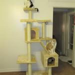 2011-08-07 - Grouik, Texas & Milou on their cat tree