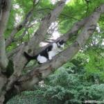 2011-08-08 - Grouik climbing a tree