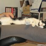 2011-09-25 - Grouik and his human