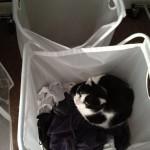 2012-02-25 - Grouik sleeping in dirty laundry