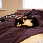 2012-02-25 - Grouik sleeping on the deck