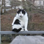 2012-03-03 - Grouik bathing on the deck