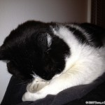 2012-04-12 - Grouik sleeping