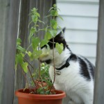 2012-06-07 - Grouik and catnip