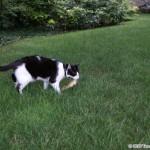 2012-07-04 - Grouik and his chipmunk