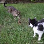 2012-07-04 - Grouik, Milou, and a chipmunk