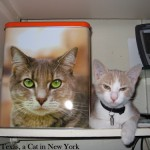 Mondays_Kitty_Box_06