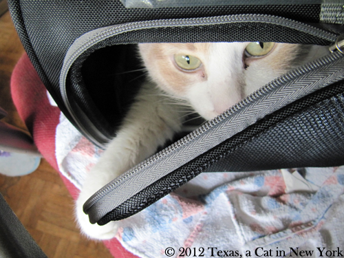 How three cats (that's us!) moved from France to America with their humans — Part 1