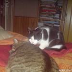 2008-10-08 - Grouik cuddles with his friend Milou