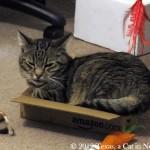 Milou-Amazon-box_01