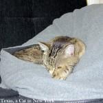 Zzzzzzzzzzz.... ***snoring sounds***