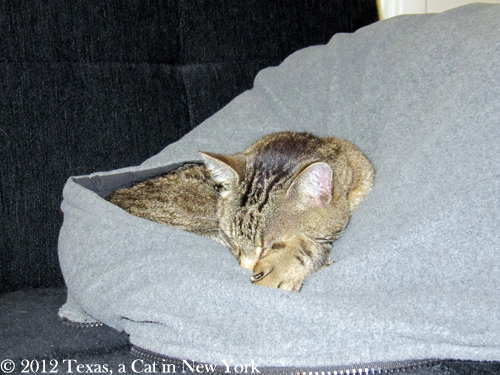 Weather cat news: it is getting cold!