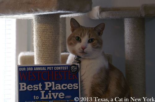 Texas in Westchester Magazine | Texas, A Parisian Cat in America