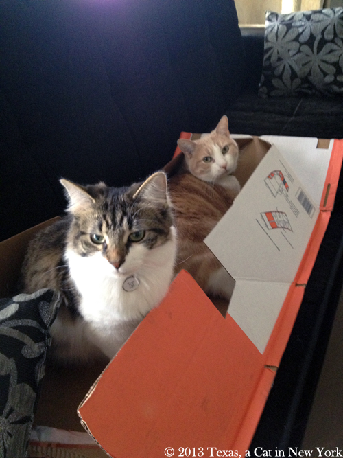 Kitshka: Texas is being mean with me, sniff... Texas: Awww... well, okay, let's share the box...