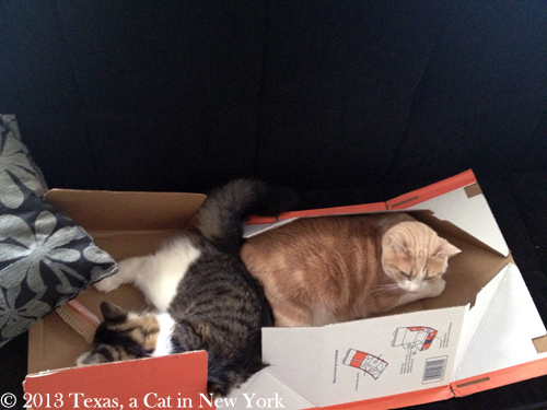 Kitshka: Hooray!! Texas: I think I'm gonna have to find me another box...