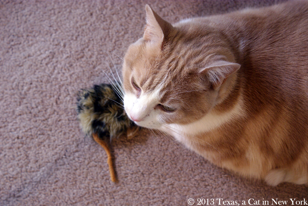 Wordless Wednesday – Guarding the nip mousie