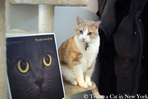 """Review: """"The Life and Love of Cats"""" by Lewis Blackwell"""