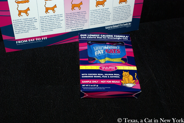 Texas a cat in New York, BlogPaws